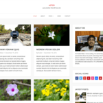 Aster WordPress Theme
