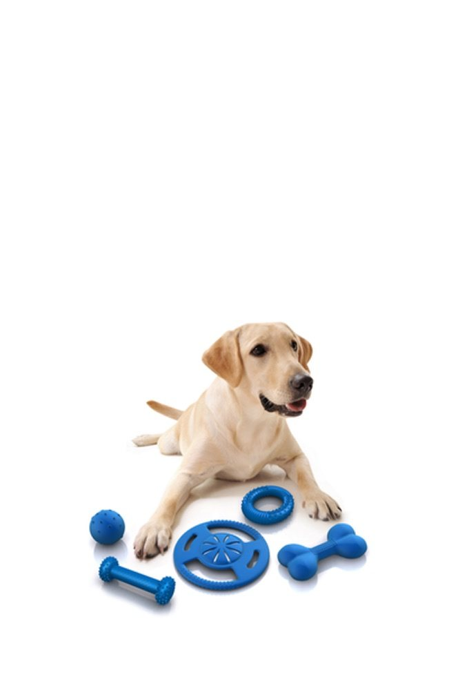 Dog lying down with his toys