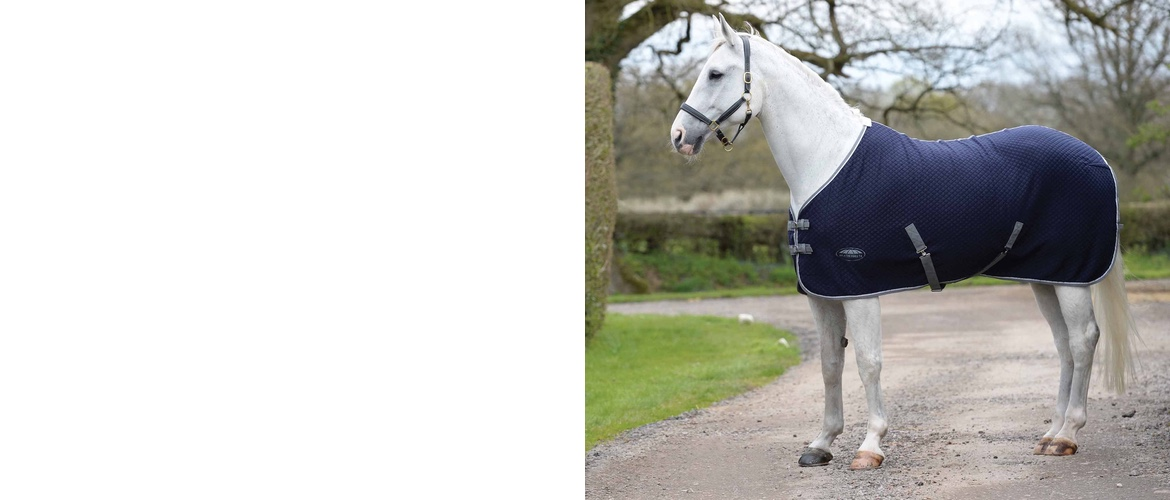 Horse with a comfy horse Rug on