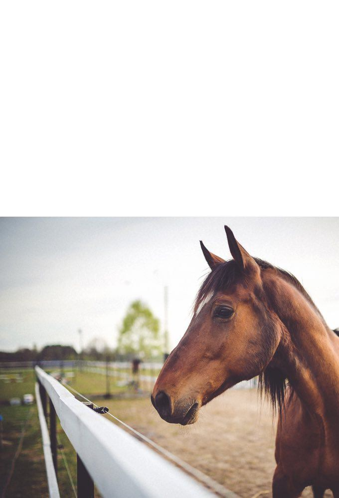 Horse in a field by an electric fence